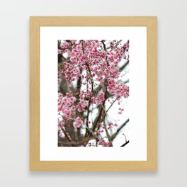 Cherry Blossoms Framed Art Print