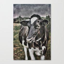 Melancholic Black White Dutch Cow Canvas Print