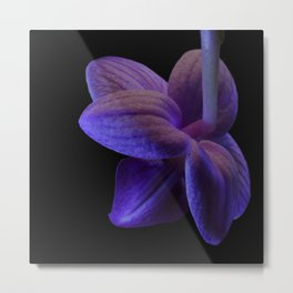 rear of Phalaenopsis Fanjan Orchid Metal Print