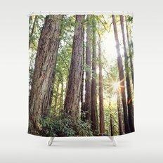 Sunlight Through Redwoods Shower Curtain