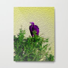 Purple vulture on a tree in Africa Metal Print