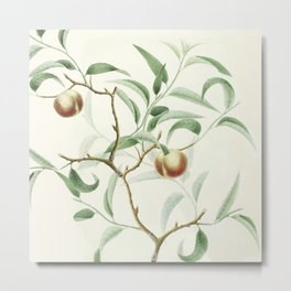 The Golden Apples of the Sun Metal Print