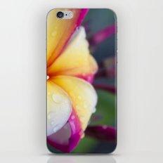 Hawaii Plumeria Flower Jewels iPhone & iPod Skin