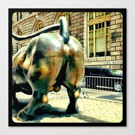 This bull has massive balls. Canvas Print
