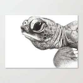 Baby Leatherback Turtle Canvas Print