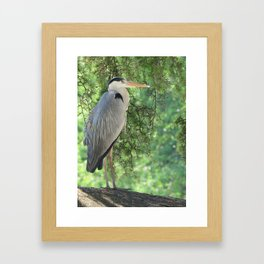 Grey heron (Ardea Cinerea) amongst trees Framed Art Print