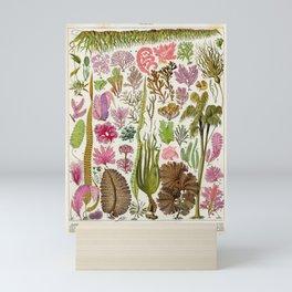 Adolphe Millot Algae Vintage Scientific Illustration Larousse Pour tous Encyclopedia Lithograph Mini Art Print