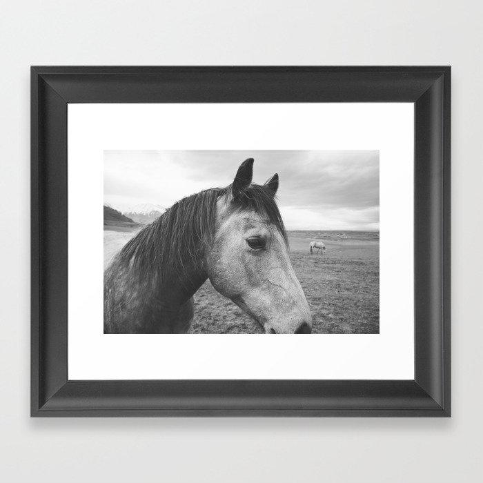 Horse Print in Black and White Framed Art Print by ...