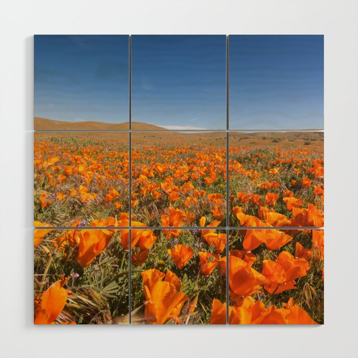 Blooming poppies in Antelope Valley Poppy Reserve Wood Wall Art