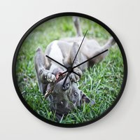 pit bull Wall Clocks featuring Pit Bull Puppy by Paw Prints By Jamie