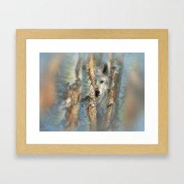 White Wolf - Focused Framed Art Print