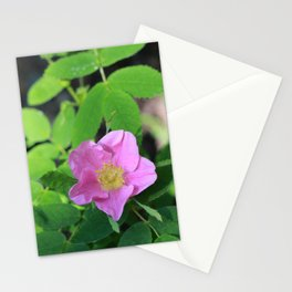 Two Wild Roses Stationery Cards