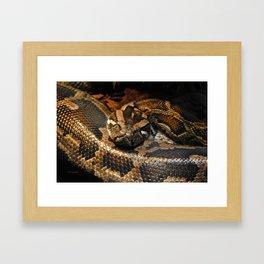 Burmese Python 1 Framed Art Print