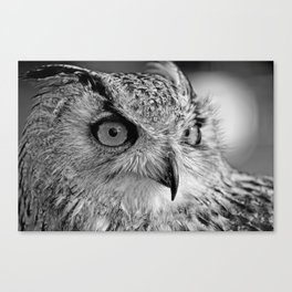 Bengal Owl black and White Canvas Print