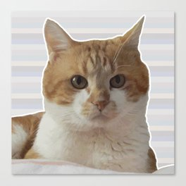 Red cat on a striped background. Canvas Print