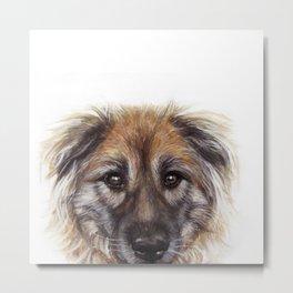 Original painting by Miart print, Mix dog, shepherd, chow chow. Metal Print