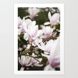 Beautiful Pink Blossoms Greet the Day Art Print