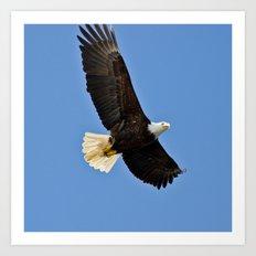 Freedom Eagle (color) Art Print