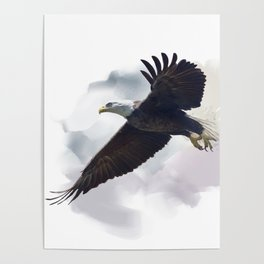 american bald eagle in flight ,watercolor painting Poster