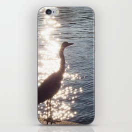 Grey Heron iPhone Skin