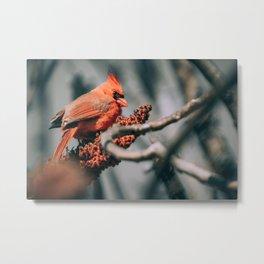 Beautiful Sumac Cardinal Metal Print