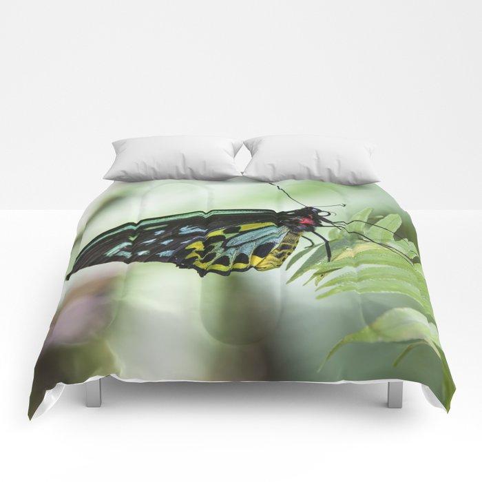 Birdwing Butterfly Comforters