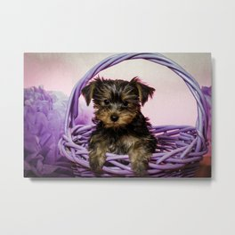 Yorkshire Terrier Puppy Sitting in a Purple Basket with Purple Floral Decorations and a Pink Backgro Metal Print