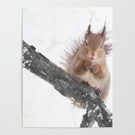Little squirrel - smack! Poster