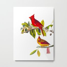 Cardinal Vintage Bird Illustration Metal Print