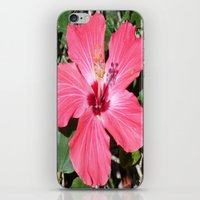 florida iPhone & iPod Skins featuring FLORIDA by Manuel Estrela 113 Art Miami