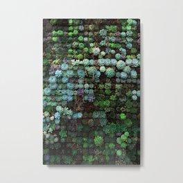 Succulents Galore Metal Print