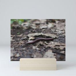 Centipede macro photography Mini Art Print