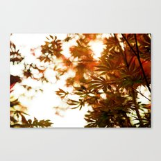 Wind in the Maple Canvas Print