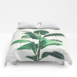 Rubber Fig Comforters