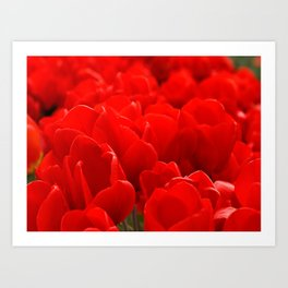 Red tulips  Art Print