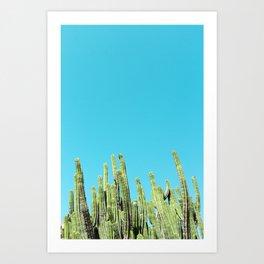 Desert Cactus Reaching for the Blue Sky Art Print