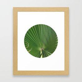 Palm Frond (circle week) Framed Art Print