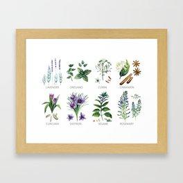 Watrolor hebs Framed Art Print
