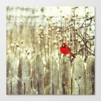 cardinal Canvas Prints featuring cardinal by Bonnie Jakobsen-Martin