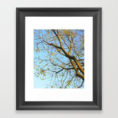 Last Leaves of Autumn Framed Art Print