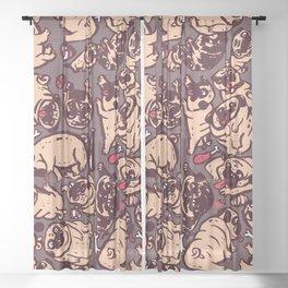 Pugs meeting Sheer Curtain