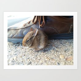 Little Cottontail Art Print