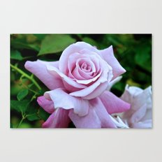 Blushing Bloom Canvas Print
