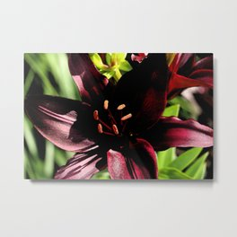 Scarlett Red Metal Print