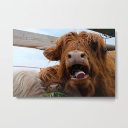 Eating Cow Metal Print