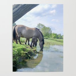 Drinking horses Poster