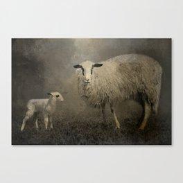 Newborn Lamb Canvas Print