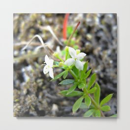 Watercolor Flower, White Flower 03, Northern Iceland Metal Print