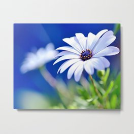 Happy White Daisy  by Kaye Menner Metal Print