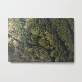 Road and Forest Metal Print